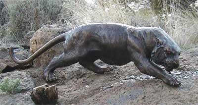Medium Cougar